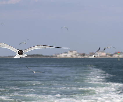 Hatteras Village And Seagulls 2 by Cathy Lindsey