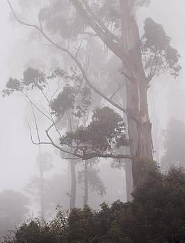 Jenny Rainbow - Haunted Forest. Nuwara Eliya. Sri Lanka