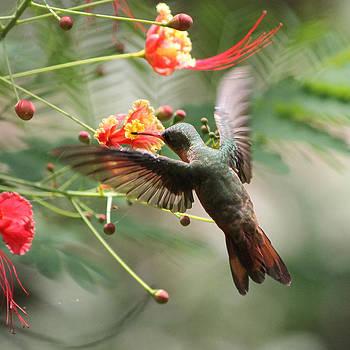 Haunting Hummingbird by Nathan Miller
