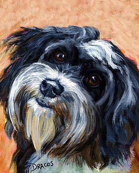 Havanese Dog Portrait by Dottie Dracos