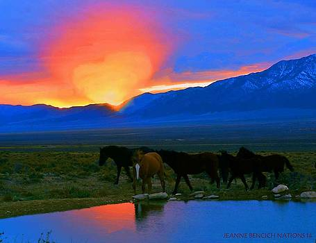 Have A Heart For Wild Horses  by Jeanne  Bencich-Nations