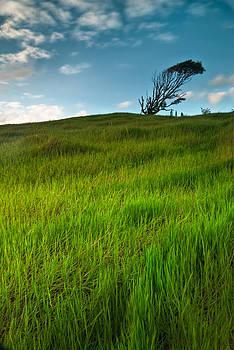 Hawaii Fantasyland HDR by Preston Broadfoot