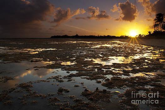 Charmian Vistaunet - Hawaii Sunset and Reef Reflections