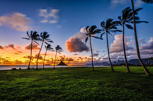 Chainaman Hat Hawaii by RB Art