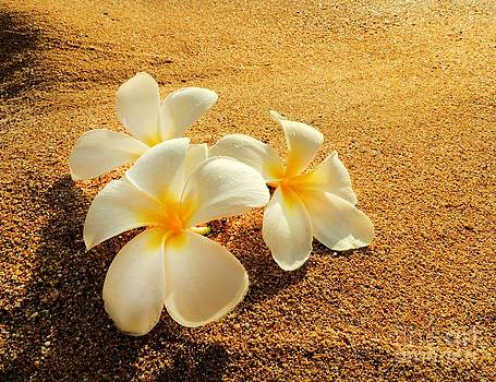 Hawaiian Plumerias by Kristine Merc