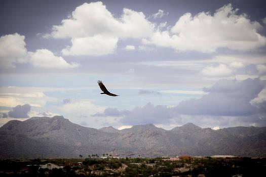 Hawk - 2013-242 by Judi FitzPatrick