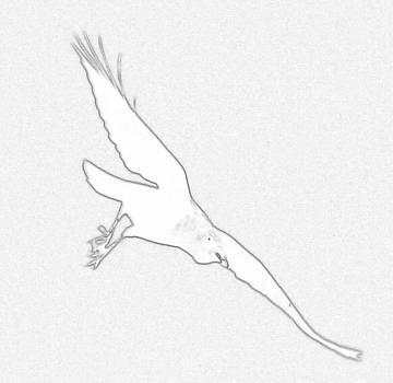 Hawk by Gary Pavlosky