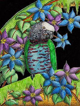 Jeanette K - Hawk-headed Parrot
