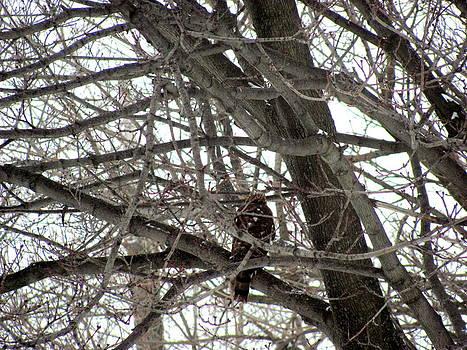 Hawk in Hiding by Carolyn Mortensen