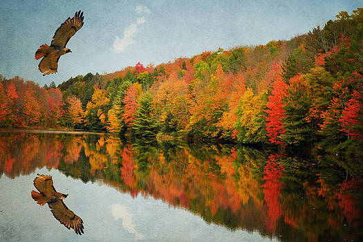 Emily Stauring - Hawk In Reflection