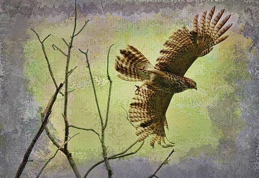 Deborah Benoit - Hawk On The Hunt