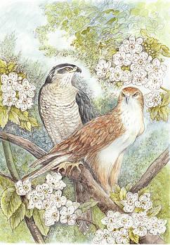 Hawks by Morgan Fitzsimons