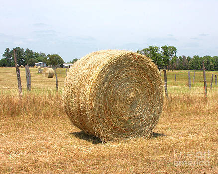 Hay Field by Pam Carter