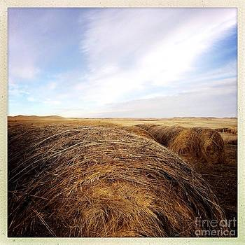 Hay by Jim Cortez