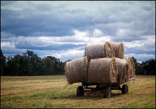 Hay There by Jeffrey Platt