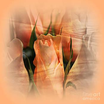 Hazy Apricot Beauty Rose Abstract by Judy Palkimas