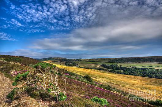 English Landscapes - Headon Warren IOW