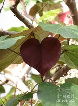 Heart by Anita Adams