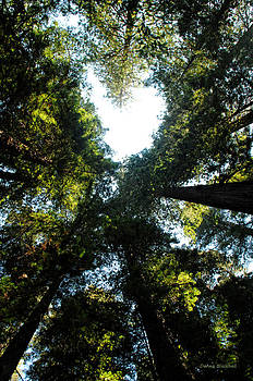 Donna Blackhall - Heart Of The Redwoods