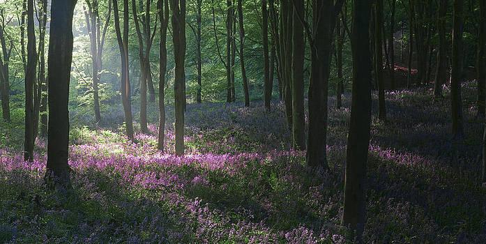 Heaven's Garden by John Chivers
