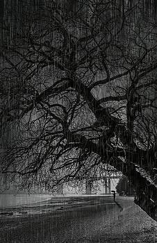 Svetlana Sewell - Heavy Rain