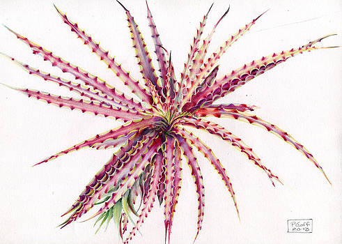 Hechtia texensis by Penrith Goff