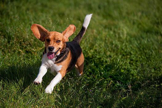 Jenny Rainbow - Heey-Yaah. Happy Puppy Beagle
