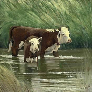Heffers In The Pond by John Reynolds