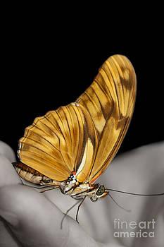 Hello butterfly by Ann-Charlotte Fjaerevik