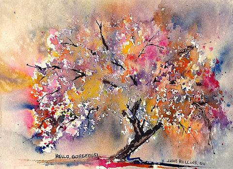 Hello Gorgeous by June Rollins