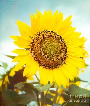 Sonja Quintero - Hello Sunshine
