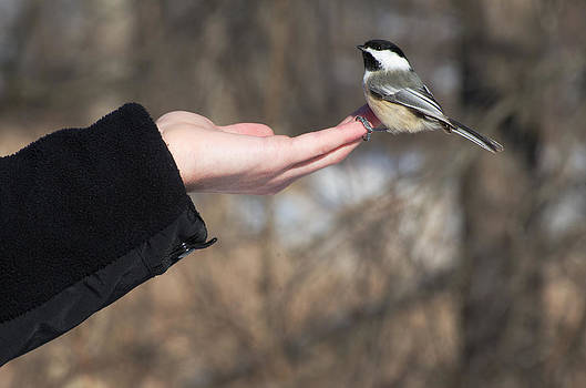 Helping Hand by Cheryl Cencich