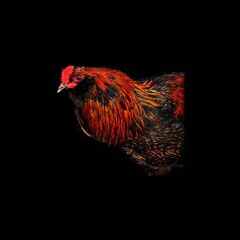 Hen by Leon Hollins III