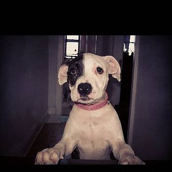 Her Name's #daisy #puppy #love by Shawn Who