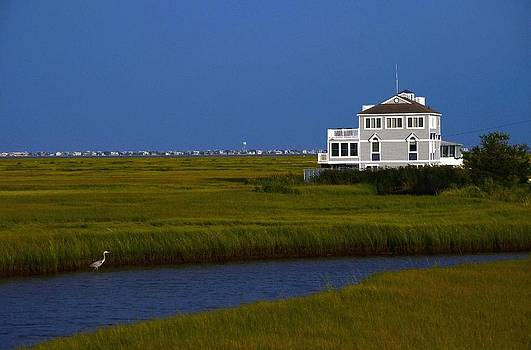 Heron and house by Paul Deforrest