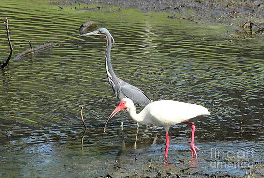 Heron and Ibis by Theresa Willingham