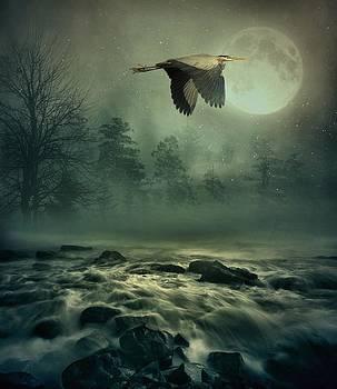 Andrea Kollo - Heron By Moonlight