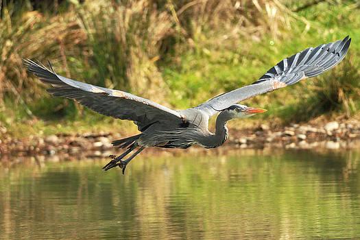 Kenneth Haley - Heron Flight I