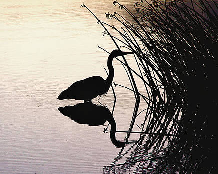 Heron Silhouette by Nancie Rowan