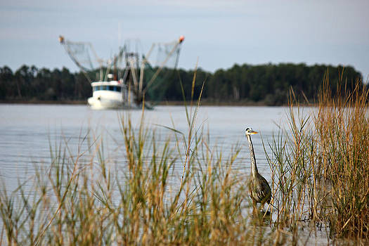 Heron Wading With Passing Shrimp Boat by Lynn Jordan