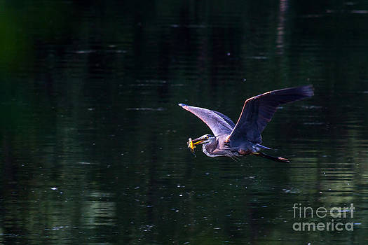 Heron's Catch by Deanna Wright