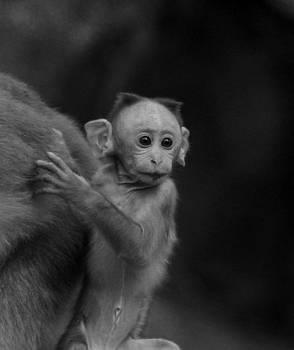 Ramabhadran Thirupattur - Hey mom look what is there