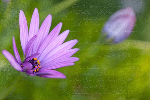 Hi Spring by Terry Ellis