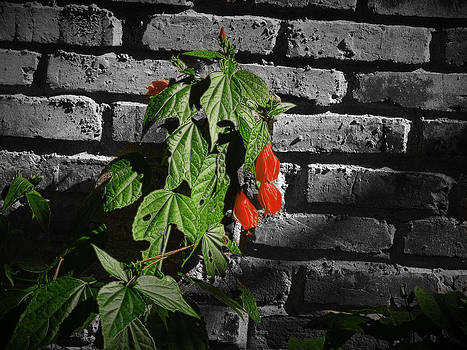 Hibiscus Against Brick by Phil Penne