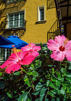 Hibiscus and Wall by Andrew Kazmierski
