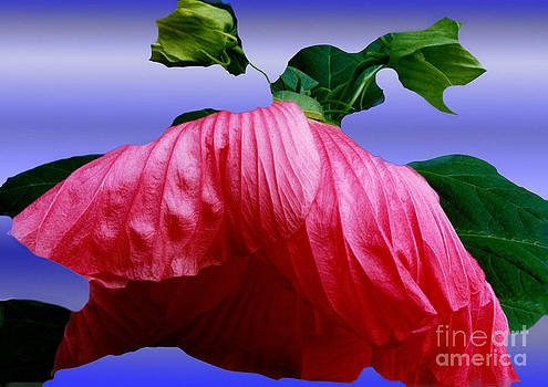 Hibiscus Bloom Wilted by ImagesAsArt Photos And Graphics