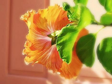 Hibiscus by Emma Bjorn