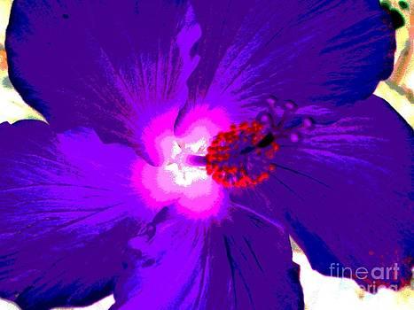 Hibiscus - Flower - Ile De La Reunion - Reunin Island by Francoise Leandre