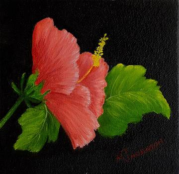 Hibiscus by Marsha Thornton