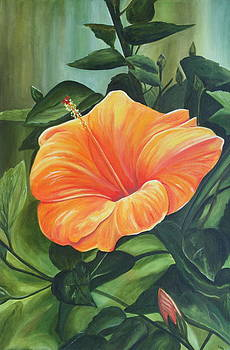 Hibiscus - Tangerine by Lyndsey Hatchwell